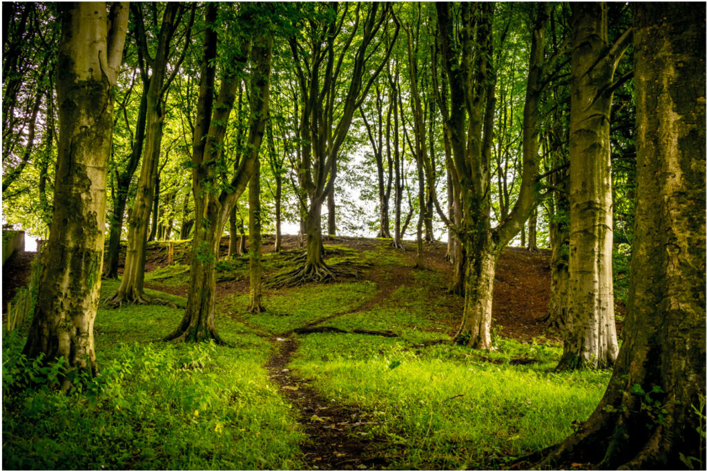 College For A Better World - podcast with Russell Jones on sustainable future, picture of a forrest